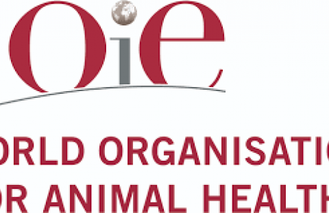 OIE english logo